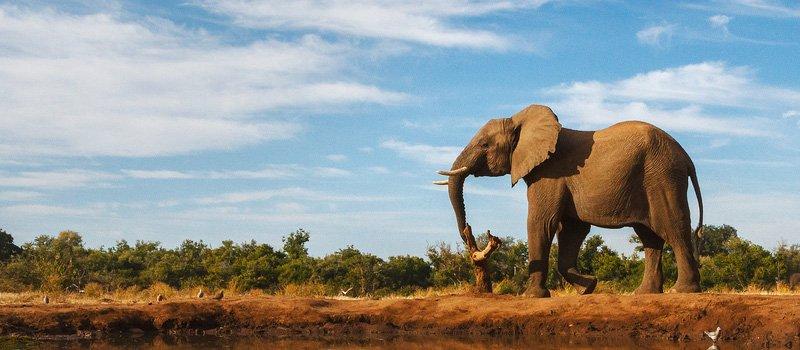 Removals to Botswana