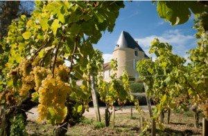 france-vineyard
