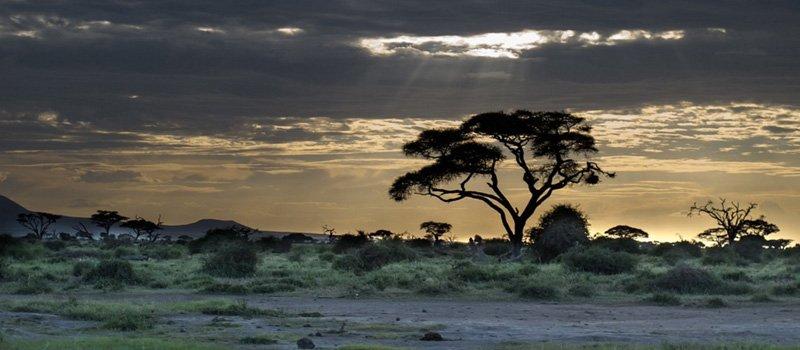 International Removals to Kenya